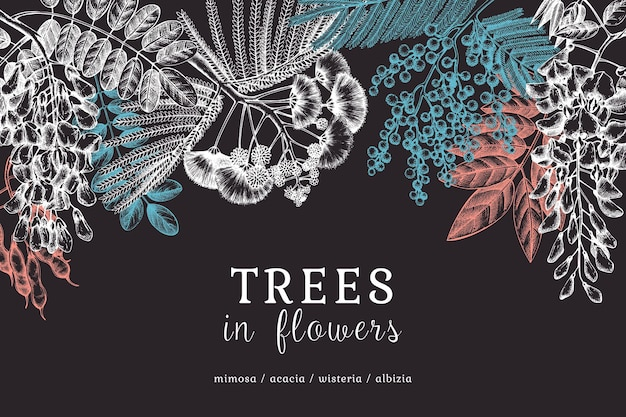 Hand sketched trees in flowers chalkboard design. vintage illustrations on blooming wisteria mimosa albizia acacia