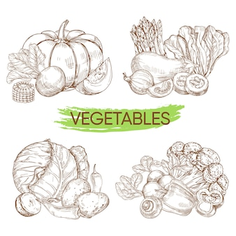 Hand sketched vector vegetables isolated on white