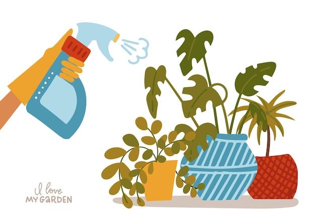 Ручное опрыскивание комнатных растений в горшках с распылителем воды