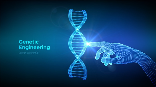 Hand touching dna sequence molecules structure mesh. wireframe dna code. genetic engineering. medical research.