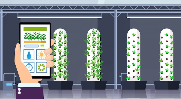 Hand using mobile app smart control farming system agriculture concept smartphone screen modern organic hydroponic vertical farm interior green plants growing industry horizontal
