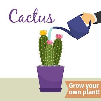 Hand watering cactus plant