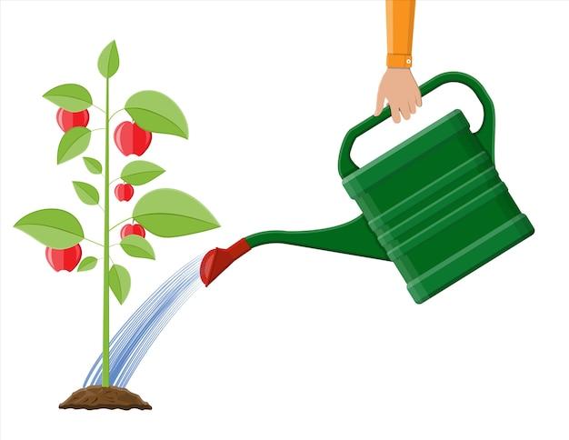 缶と果物の木に水をまく手。