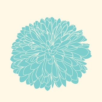 Handdrawn dark blue chrysanthemum.