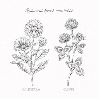 Handdrawn spices and herbs