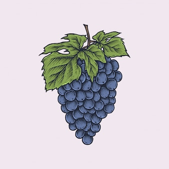 Handdrawn vintage grape