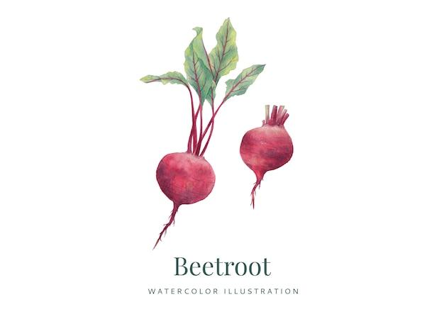 Handdrawn watercolor beetoot