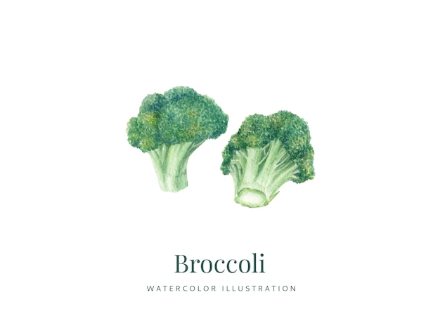 Handdrawn watercolor broccoli