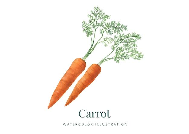 Handdrawn акварель морковь