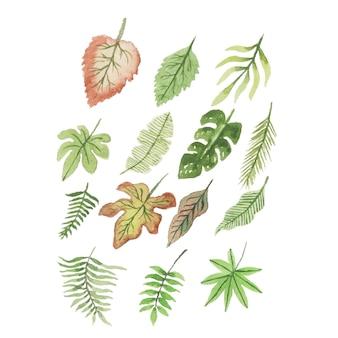 Коллекции акварельных тропических листьев ручной работы