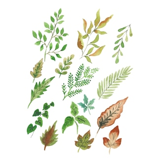Handmade watercolor tropical leaves collections