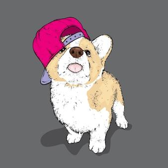 キャップでハンサムな子犬。コーギー。