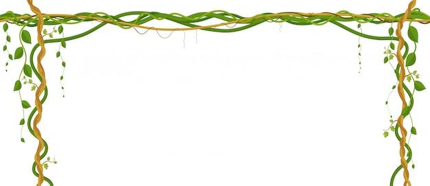 Висячие ветки лозы. тропические джунгли и растения на белом