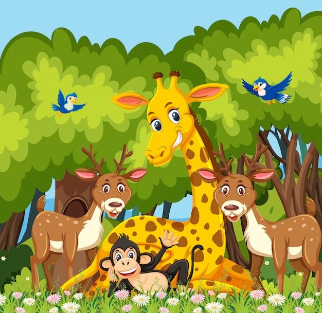 Happy animal in the jungle