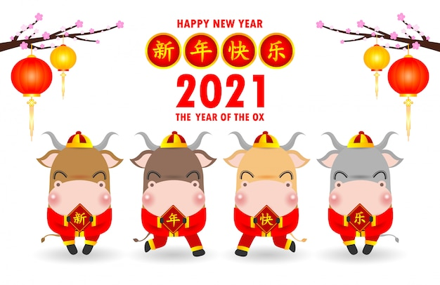 Happy chinese new year 2021, four little ox holding a signs with chinese gold