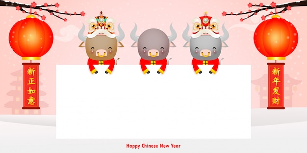 Happy chinese new year 2021 of the ox zodiac poster design with cute little cow holding sign and lion dance, the year of the ox greeting card holidays isolated background, translation: happy new year