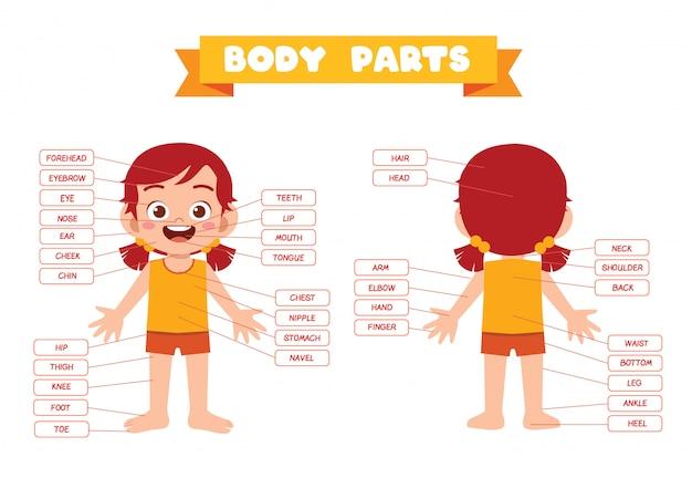 Happy cute kid girl body part anatomy
