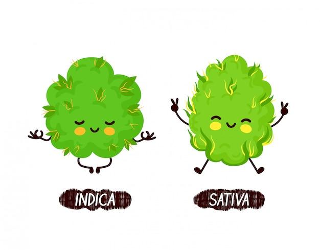 幸せなかわいい笑顔のインディカとサティバの雑草の芽。