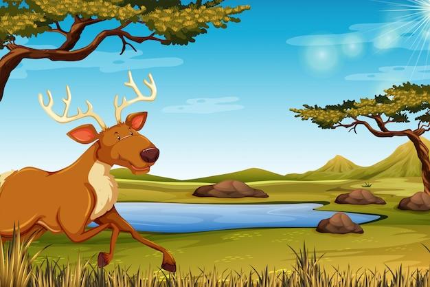 Счастливый олень на природе