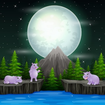 Happy a group of hippopotamus in night landscape