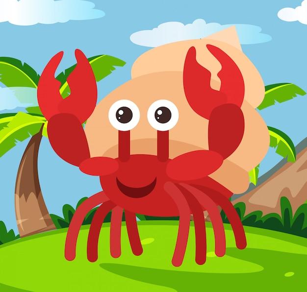 Happy hermit crab in land