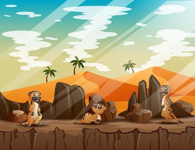 Счастливые сурикаты играют на скале