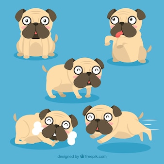 Happy pugs with modern style