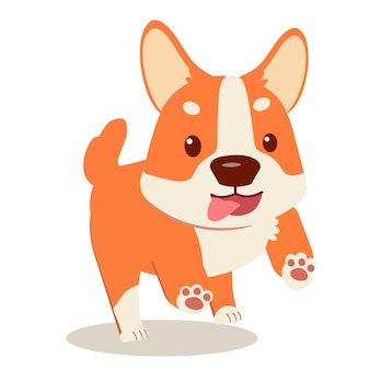 Happy puppy corgi