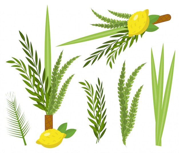 Happy sukkot set. collection of objects,  elements for jewish feast of tabernacles with etrog, lulav, arava, hadas.  on white background.  illustration.