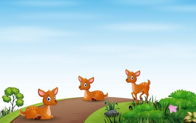 道路で楽しんで幸せな3つの鹿
