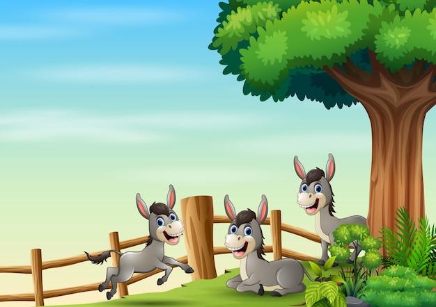 Happy three of donkey inside the fence