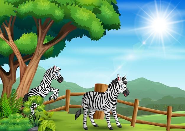 オープン動物園で遊んで幸せな2つのシマウマ