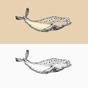 ゼニガタアザラシ海洋生物航海動物または鰭脚類ヴィンテージレトロサイン落書きスタイルの手