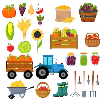 Harvest symbols isolated vector.