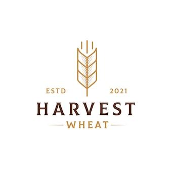 Harvest wheat logo template