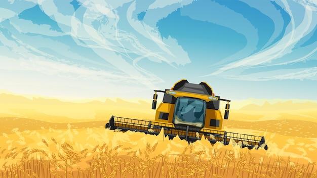 Комбайн на золотом пшеничном поле голубое небо.