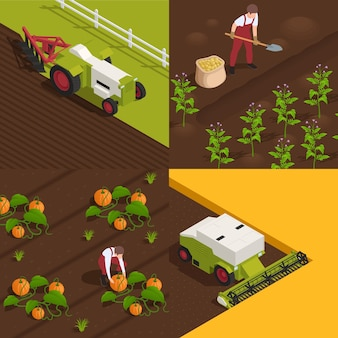 Harvesting concept 4 isometric compositions with farm workers