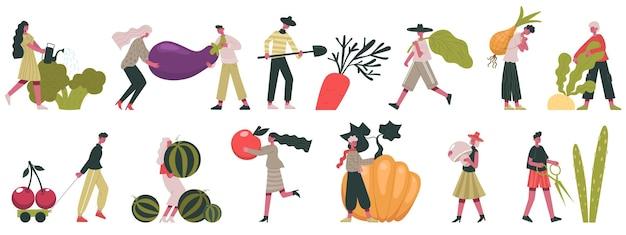 야채 수확. 가을 수확, 과일 및 채소 재배, 농장 벡터 일러스트레이션 작업을 하는 사람들. 가을 수확과 정원사. 야채 영양, 가지와 당근 수확