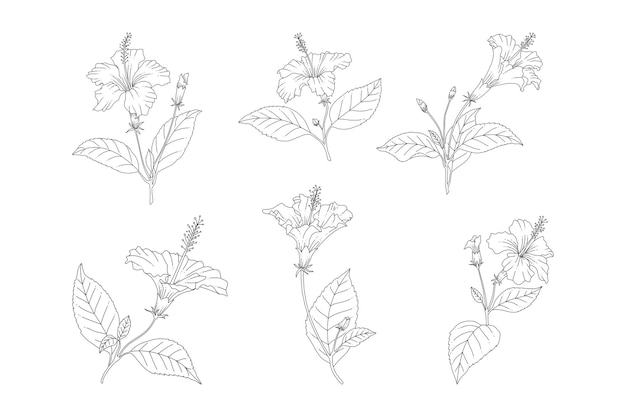 하와이 장미 꽃 손으로 그린 요소 집합