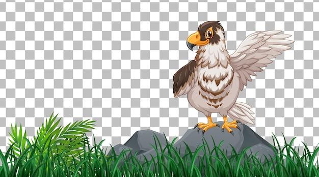 Falco in piedi sul campo in erba su sfondo trasparente