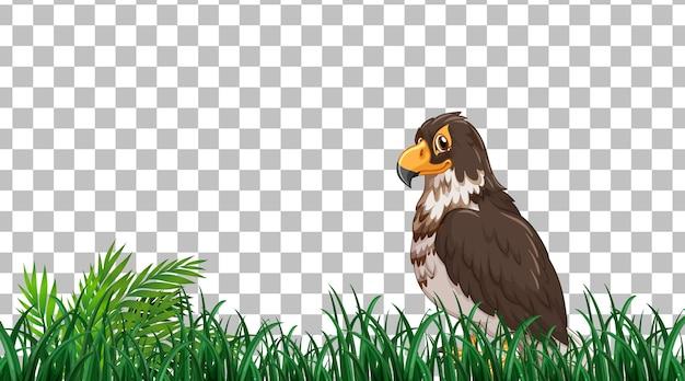 透明な背景の芝生のフィールドに立っているタカ