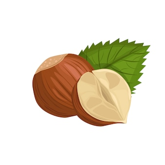 Фундук с листом