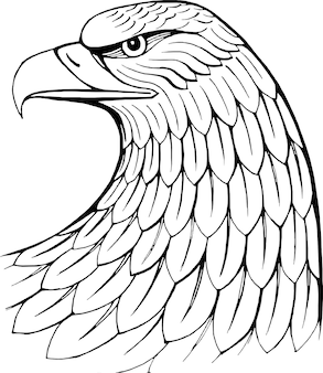 Head of eagle hand drawn vector illustration  isolated on white heraldry