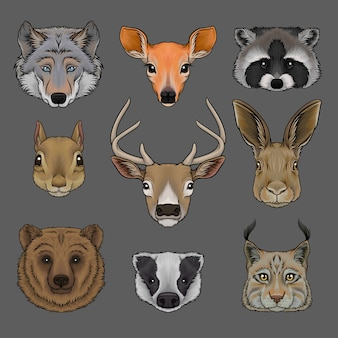 野生動物の頭のセット、オオカミ、doe、アライグマ、リス、鹿、ウサギ、クマ、アナグマ、オオヤマネコの手描きイラストの肖像画
