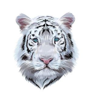 Головной портрет белого бенгальского тигра из разноцветных красок, цветной рисунок