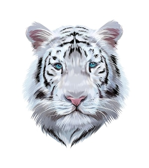 Head portrait of a white bengal tiger from multicolored paints colored drawing