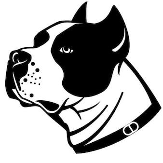 Head of stafford dog breed