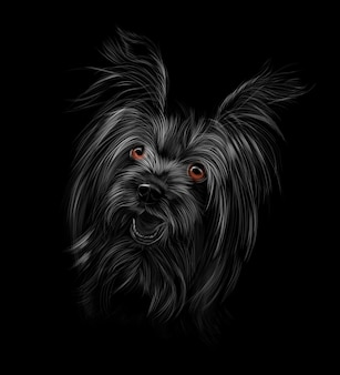 Head of yorkshire terrier on black background vector illustration of paints