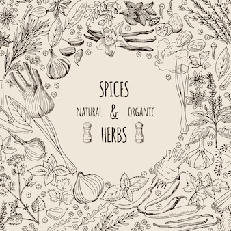 Healthy background illustrations with spices and herbs.