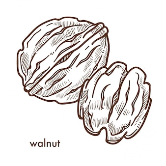 Здоровый вкусный орех в твердой скорлупе